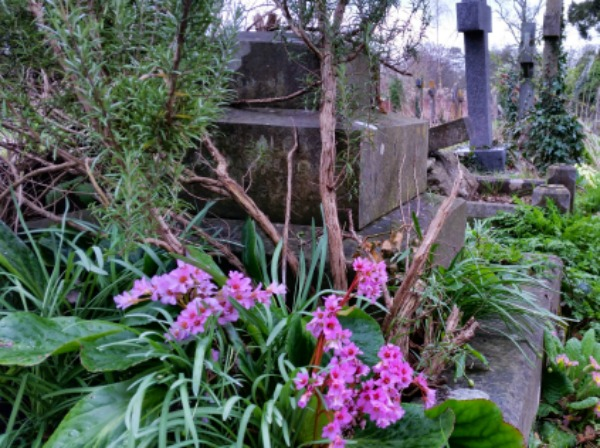 St.Martin's Church, Corsham, Wiltshire.Graveyard looked after by Wiltshire Wildlife Trust