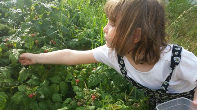 mraspberries