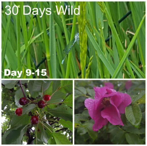 30 Days Wild 2016- Day 9-15