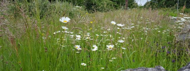 wildflower Wavin 30 Days Wild