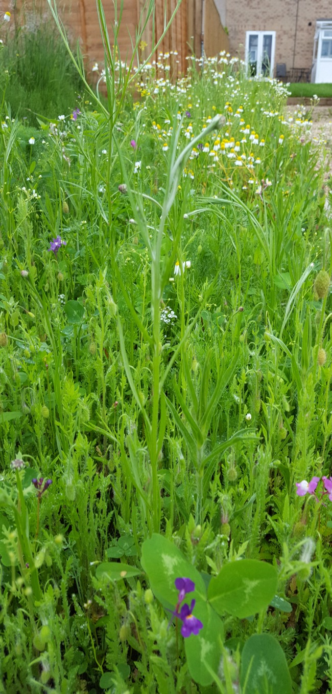 wildflower bed 30 Days Wild