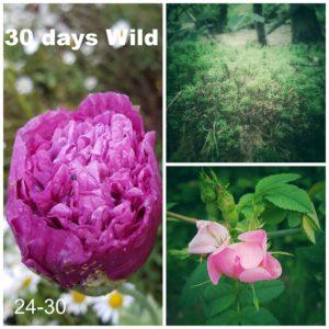 30 Days Wild 24-30